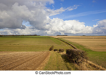 yorkshire wolds hills and hedgerows - hawthorn hedgerows in...