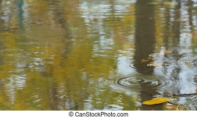 Closeup of maple leaves at the autumn drifting on water -...