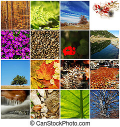nature / autumn collage - collage from different shots,...