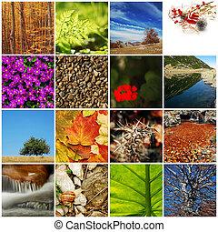 természet, /, Ősz, kollázs