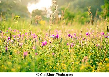 bello, estate, naturale, prato, alba, fiori, paesaggio