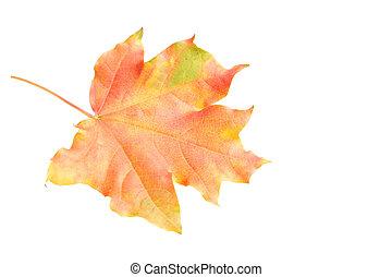 秋, 白, 葉, 隔離された