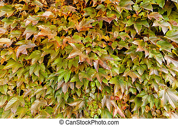 green wild tree-creeper on the begining of autumn, note...