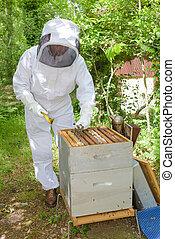 apiary work career