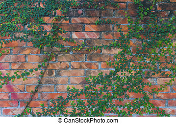 Plants climbing red brick wall background