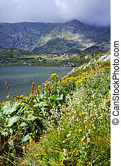 The Seven Rila Lakes, Bulgaria - Flowers and The Trefoil...