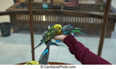 Footage People are fed up with hand budgies. 4K video
