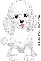 Poodle - Illustration of chic poodle
