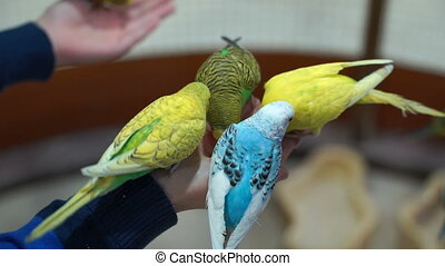 Footage People are fed up with hand budgies.