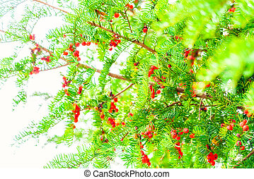 Christmas red berry