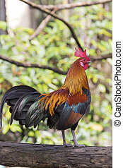 Image of a cock on nature background