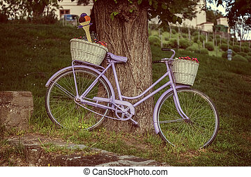 Old bicycle an old tree in Village Tihany of Hungary