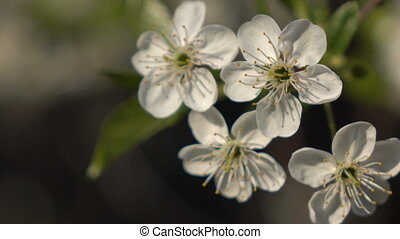 Flowering branches on a background of flowers and plans 4 -...
