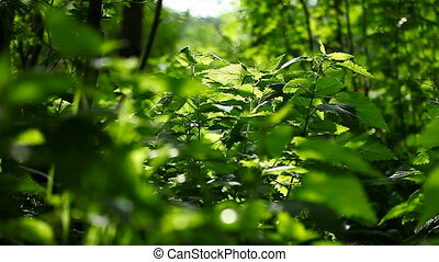 Green nettle. Natural sunny summer background.