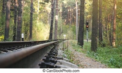 Railway Road in the deep pine forest in slow motion.