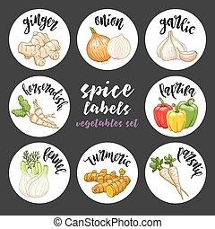 Spices herbs labels. Colored vector vegetables set - Spices...