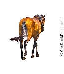 Back View Brown Horse Isolated