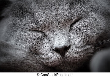 Face close-up of a young cute cat sleeping blissfully. The...