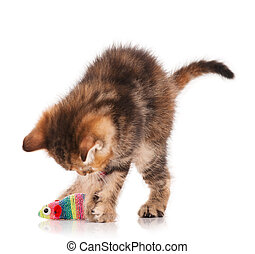 Cute little kitten with toy mouse isolated on white...