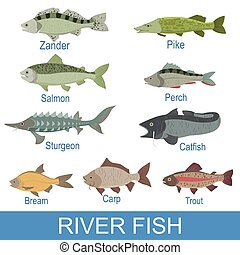 River Fish Identification Slate With Names. Realistic...