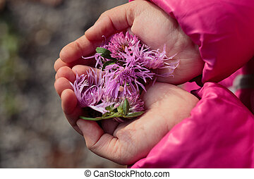 Child holding purple flowers in hands
