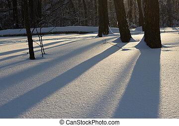 sun light through the trees, winter sunset