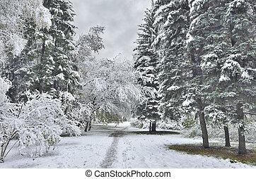 tard, hiver, après, automne, chute neige, ou, paysage, premier