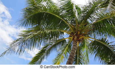 Coconut palm tree on Beautiful Tropical beach and sky