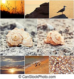 Wild nature of the sea collage of toned sunset photos....