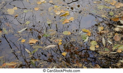 The leaves floating on the water surface. Autumn day.