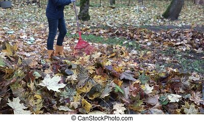 Woman in yellow boots raking fall leaves with red rake in...