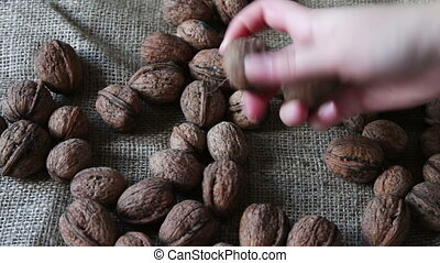 Lot of ripe walnuts with peel - Lots of ripe walnuts in a...