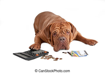 Dog with calculator, cents and credit cards - Dogue de...