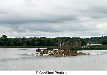 Pelican and Cormorant Rookery on Pigeon Lake Island - A...