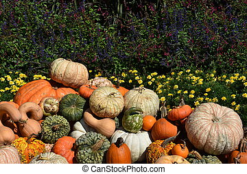 A Variety of Colorful Pumpkins