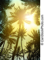 Coconut palm tree silhouettes at sunset.