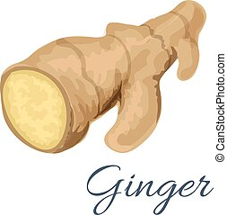 Ginger root spice isolated icon - Ginger root isolated icon....