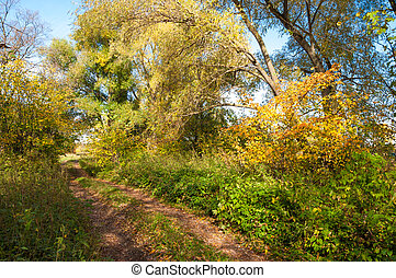 Autumn trees with yellow leaves, the road in the autumn forest