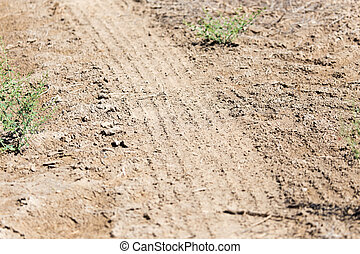 dirt road in nature