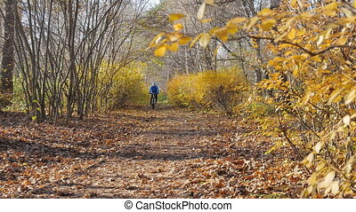 A cyclist rides along a path in a park, in a beautiful sunny...