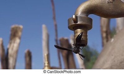Faucet in ethiopia with dripping water - Faucet in africa...
