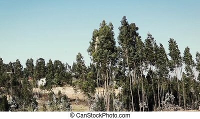 Trees waving on a wind in africa - Landscape with trees...