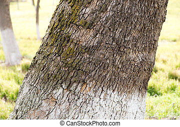 trunk of a tree in a park on the nature