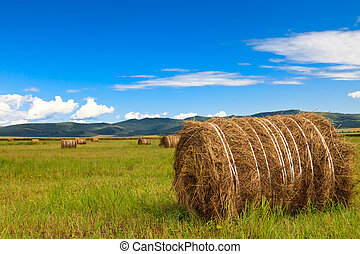 meadow of Inner Mongolia - the scene of the meadow Inner...