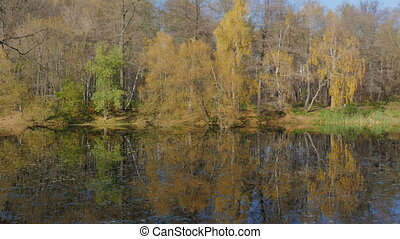 Beautiful autumn landscape. Sunny day, lake yellow leaves