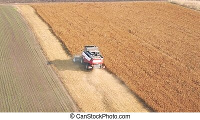 Combine harvester harvest ripe wheat on a farm