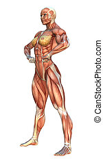 3D Rendering Muscle Maps