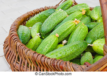 Basket  filled by cucumbers