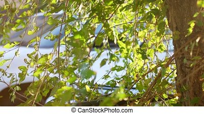Green tree backlit in the street footage shot with natural...