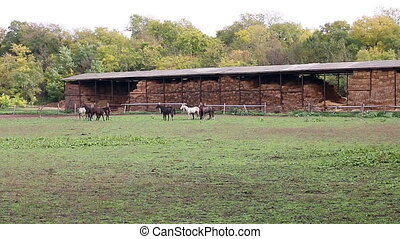 herd of  horses on farm